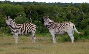 Addo Elephant National Park2
